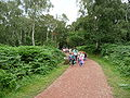 Sherwood Forest 04.jpg