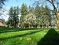 Shute Park field - Hillsboro, Oregon.JPG