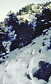 Sierra de las Nieves 1975 13.jpg