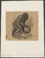Simia satyrus - 1862-1876 - Print - Iconographia Zoologica - Special Collections University of Amsterdam - UBA01 IZ19800017.tif