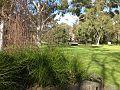 Simpson lawn-2.jpg