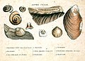 Smith fossils1.jpg