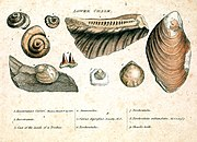 Engraving from William Smith's monograph on identifying strata based on fossils