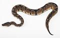Snake33.jpg