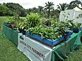Snap from Lalbagh Flower Show Aug 2013 8798.JPG