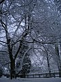 Snowy trees in Golders Hill Park NW11 - geograph.org.uk - 1651822.jpg