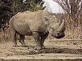 Sofia Zoo - Rhino 008.jpg