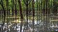 Sontoshpur Rubber Garden.jpg