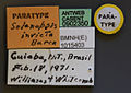 Specimen CASENT0902350 Solenopsis invicta label.jpg