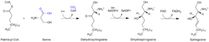 Biosynthesis - Sphingosine synthesis
