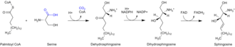 Sphingosine - Sphingosine synthesis
