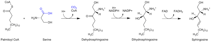 Sphingosine synthesis corrected.png