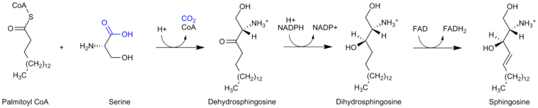 Sphingosine synthesis