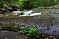 Spring-wildflowers-stream-wv - West Virginia - ForestWander.jpg