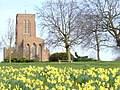 Spring at Guildford Cathedral - geograph.org.uk - 1215976.jpg