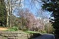 Spring blossom at Cyfarthfa Castle - geograph.org.uk - 1249824.jpg