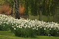 Spring in London (7116603849).jpg