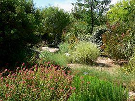 Wonderful Springs Preserve Garden Plants