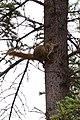 Squirrel - panoramio (6).jpg