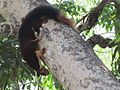 Squirrel jumbing.jpg