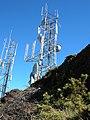 Starr-041211-1418-Leptecophylla tameiameiae-towers-Puu Nianiau-Maui (24694940136).jpg