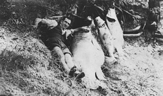 1936 Bundaberg distillery fire - Fish killed by spillage in the Millaquin Distillery fire