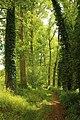 Steenbergse bossen 10.jpg