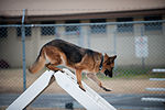 Stella, Bizallion, Guarding the Wolf Pack 140313-F-BS505-033.jpg
