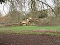 Storm Damaged Tree - geograph.org.uk - 334917.jpg