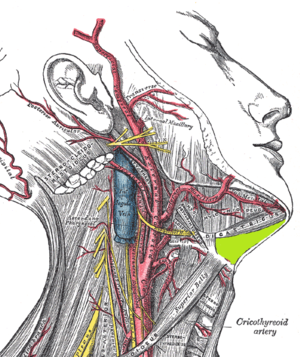 Submental space - Submental space situated on the superficial surface of mylohyoid muscle, medial to the anterior belly of the digastric muscle (highlighted in green).