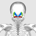Suboccipital triangle05.png