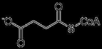 Methylmalonyl-CoA mutase - Image: Succinyl Co A
