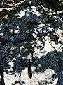 Svastiska gravé au sommet.jpg