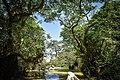 Swamp forest (2).jpg