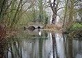 Swan on River Black Bourn, Ixworth, Suffolk.jpg