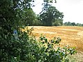 Sweetbrier Farm from Greensand Ridge Walk footpath - geograph.org.uk - 515870.jpg