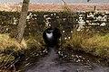 Sweethope Stream - geograph.org.uk - 788817.jpg
