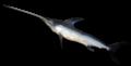 Swordfish-0016.png