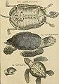 Tableau encyclopédique et méthodique des trois règnes de la nature - dédié et présenté a M. Necker, ministre d'État, and directeur général des Finances (1789) (14782063442).jpg