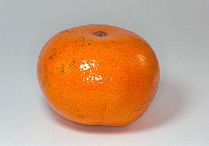 Tangerine - A Murcott, likely a tangerine hybrid