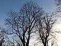 Tartu - -i---i- (31618872344).jpg