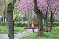 Tashkent park6.jpg