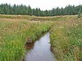 The Clints Burn, Wark Forest - geograph.org.uk - 212611.jpg