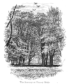 The New Forest its history and its scenery - page 258.png
