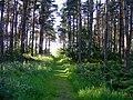 The Path to Spynie Loch - geograph.org.uk - 1368925.jpg