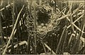The Wilson bulletin (1915) (14749398212).jpg