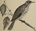 The birds of Ontario in relation to agriculture (1901) (14562823800).jpg