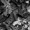 The brittle fracture surface of low-carbon steel.jpg