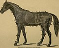 The handy horse book - a manual for every American horse-owner (1883) (14765432582).jpg