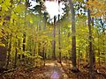 The sun finds a hole in between the trees- Le soleil perce au travers les arbres - panoramio.jpg